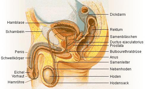 Kurz Trinásta komnata – masáž prostaty